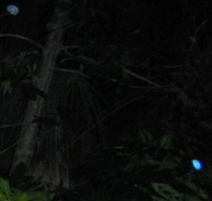 July 20-2014 Bright Blue orb & 1 other close up 2086